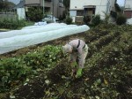 H261021サツマイモ掘りの段取り (5)