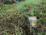 H261021サツマイモ掘りの段取り (13)