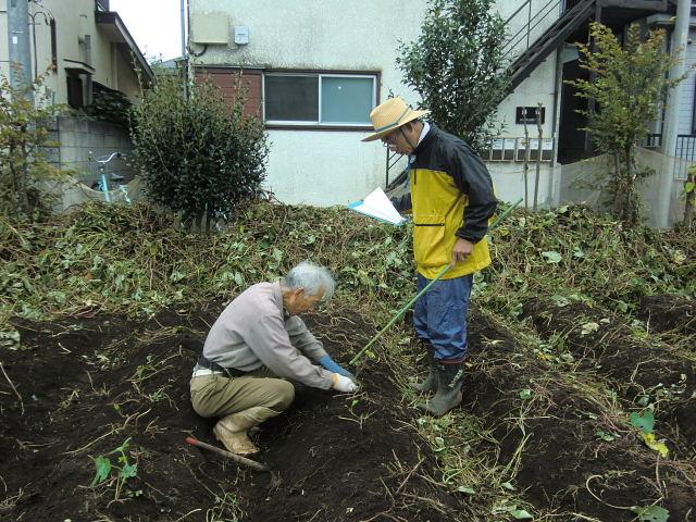 H261021サツマイモ掘りの段取り (6)