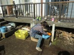 H261025サツマイモ掘り準備 (12)