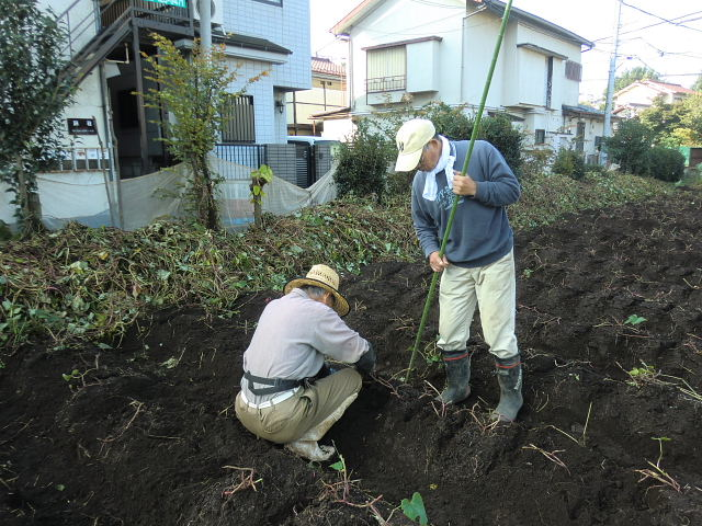 H261025サツマイモ掘り準備 (7)