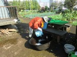 H261025サツマイモ掘り準備 (11)