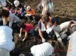 H261026サツマイモ掘り及び炊き出し訓練 (29)