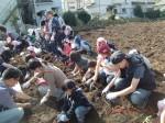 H261026サツマイモ掘り及び炊き出し訓練 (62)