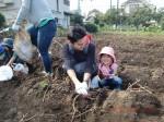H261026サツマイモ掘り2 (32)