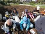 H261026サツマイモ掘り及び炊き出し訓練 (31)