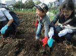 H261026サツマイモ掘り2 (11)