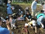 H261026サツマイモ掘り2 (42)