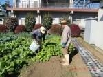 H261116_野島農園 (10)