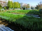 H261116_野島農園 (56)