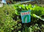 H261116_野島農園 (30)