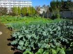 H261116_野島農園 (44)