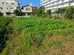 H261116_野島農園 (54)