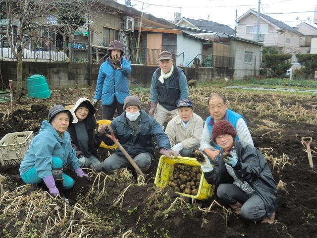 H261221ジャガイモ・サトイモ収穫 (3)