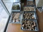 H261221ジャガイモ・サトイモ収穫 (34)