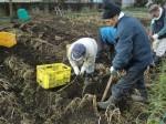 H261221ジャガイモ・サトイモ収穫 (6)