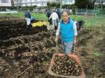 H261221ジャガイモ・サトイモ収穫 (8)
