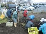 H261221ジャガイモ・サトイモ収穫 (13)
