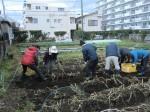 H261221ジャガイモ・サトイモ収穫 (15)