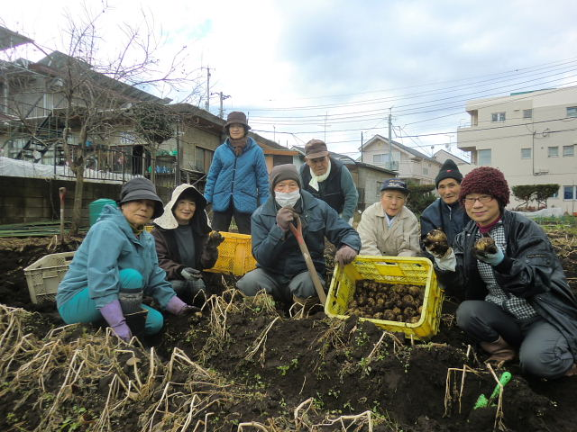 H261221ジャガイモ・サトイモ収穫 (2)