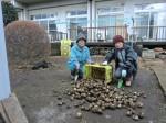 H261221ジャガイモ・サトイモ収穫 (35)