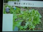 H261124大仁農場交流会 (39)