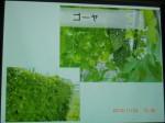 H261124大仁農場交流会 (40)