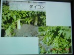 H261124大仁農場交流会 (42)