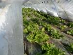 H270131野島農園の様子 (25)