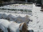 H270131野島農園の様子 (29)