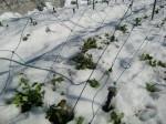 H270131野島農園の様子 (10)