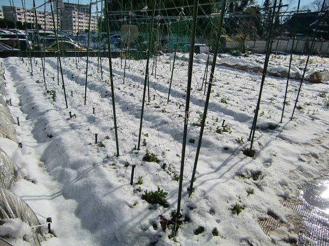 H270131野島農園の様子 (30)