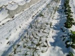 H270131野島農園の様子 (9)