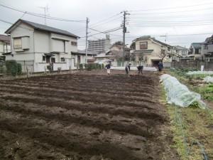 H270303ジャガイモの種植え (2)