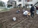H270309ジャガイモ種植え (10)
