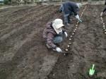 H270309ジャガイモ種植え (16)