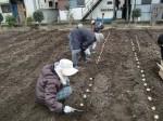 H270309ジャガイモ種植え (19)