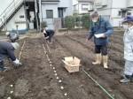 H270309ジャガイモ種植え (20)