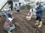 H270309ジャガイモ種植え (21)