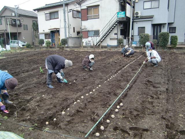 H270309ジャガイモ種植え (28)
