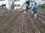 H270309ジャガイモ種植え (3)
