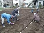 H270309ジャガイモ種植え (30)