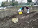H270309ジャガイモ種植え (42)