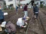 H270309ジャガイモ種植え (9)