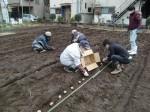 H270309ジャガイモ種植え (11)
