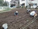 H270309ジャガイモ種植え (13)