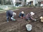 H270309ジャガイモ種植え (14)