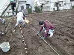 H270309ジャガイモ種植え (15)
