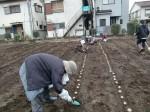 H270309ジャガイモ種植え (23)