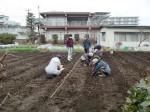 H270309ジャガイモ種植え (26)